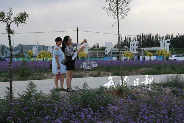 游客在薰衣草花海赏花。.jpg