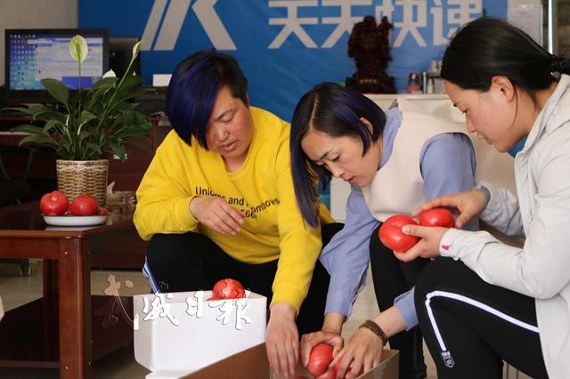 曹文花(中)和员工在分拣西红柿。.jpg